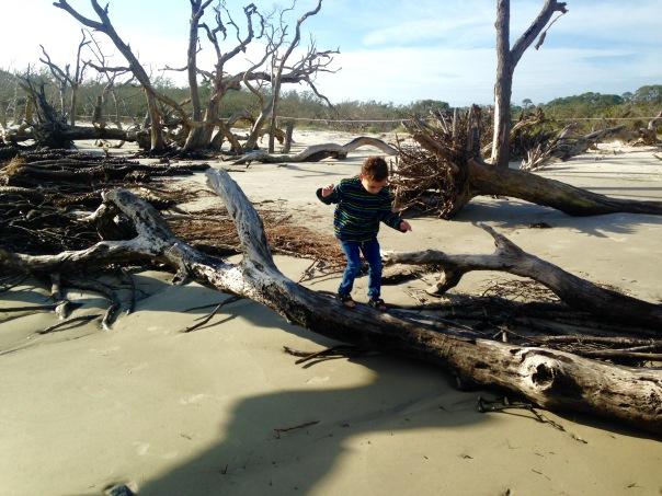 Nolan Driftwood Beach